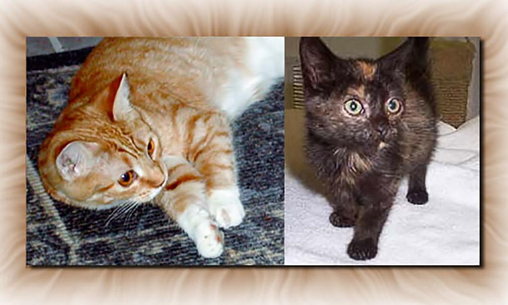 2004-01-05 Feline Invasion. Danette and Cachot arrive.