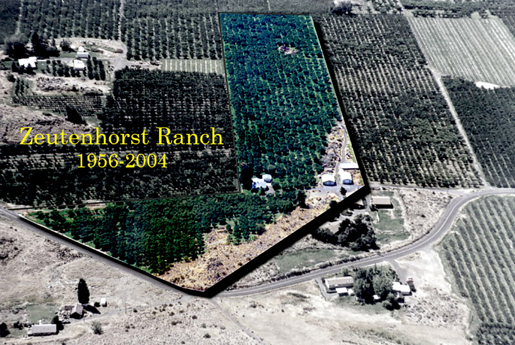 2004-08-07 Farewell to the Ranch.  Seventeen acres of cherries, peaches, a couple apple trees, an apricot tree, a plum tree, an erstwhile walnut tree and Dad's raspberrry bushes. Acres that include piles of  volcanic rocks, both small and monumental,  many excavated over the decades from beneath the roots of dying fruit trees. The desiccated cheatgrass and  tumbleweeds; the wizened sagebrush (Artemisia tridentata) years older than us. Gopher holes galore revealed by tell-tale mounds of rich soil peaking above the thick orchard grass.  Zeutenhorst Ranch, Naches Heights, Washington