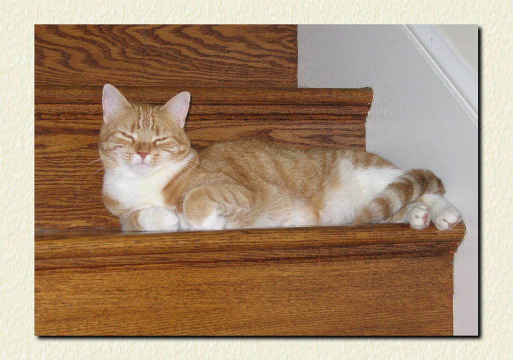 2005-05-30 Purr-fectly Content—Danette on the Stairsteps