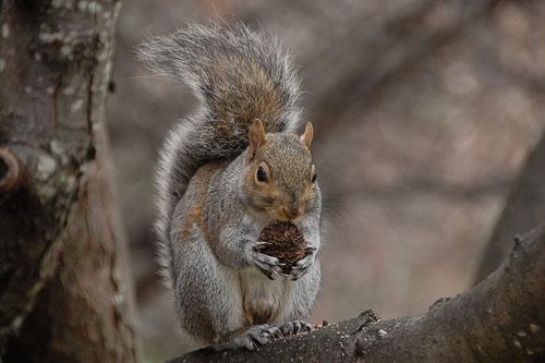 2007-12-15-Randolph-Squirrel.jpg