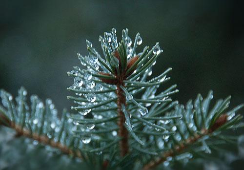 2010-01-17-Winter-Rain.jpg