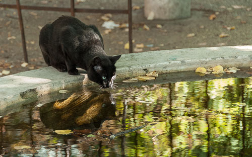 2011-09-22-Chat-Pernes-les-Fontaines.jpg