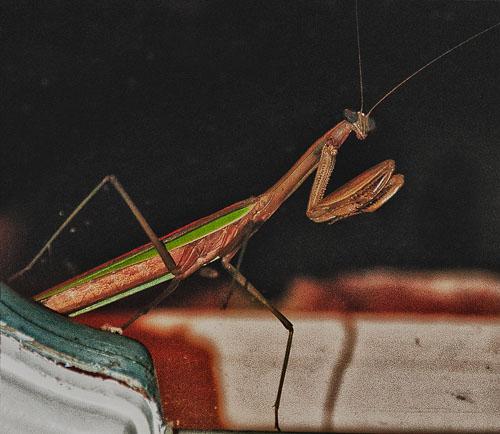 2012-09-13-Mantis.jpg
