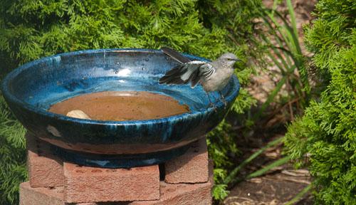 2012-09-24-Bird-Bath-Zen.jpg