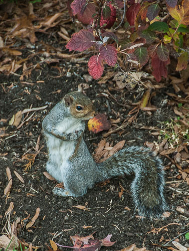 2012-11-26-Squirrel.jpg