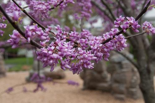 2013-04-22-Blossoms.jpg