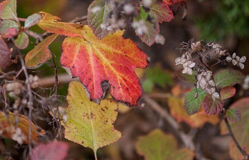 2013-11-19-Autumn-Foliage.jpg