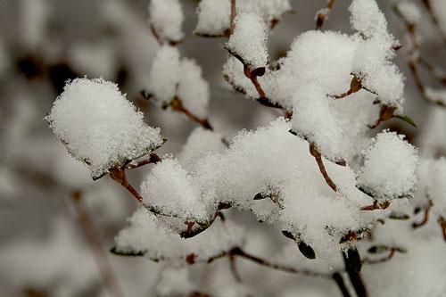 2014-02-25-Snow-Encore.jpg