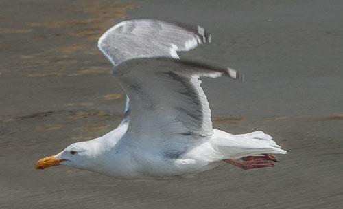 2014-07-02-On-Wing-Seabrook.jpg