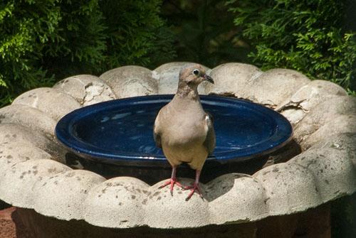 2014-08-14-Eye-of-the-Pigeon.jpg