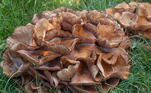 2014-09-16-Fungus-AmongUs.jpg