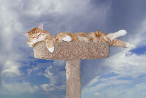 2014-09-29-Moms-Cat-Pepin.jpg