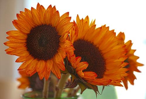 2014-10-20-Fleurs-de-Conrad.jpg