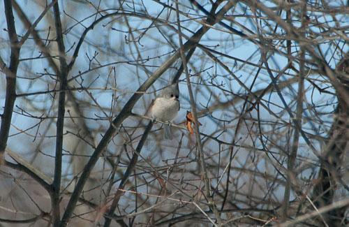 2015-02-27-Winter-Visitor.jpg