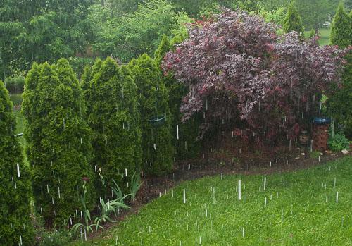 2015-05-26-Rain-Drops.jpg