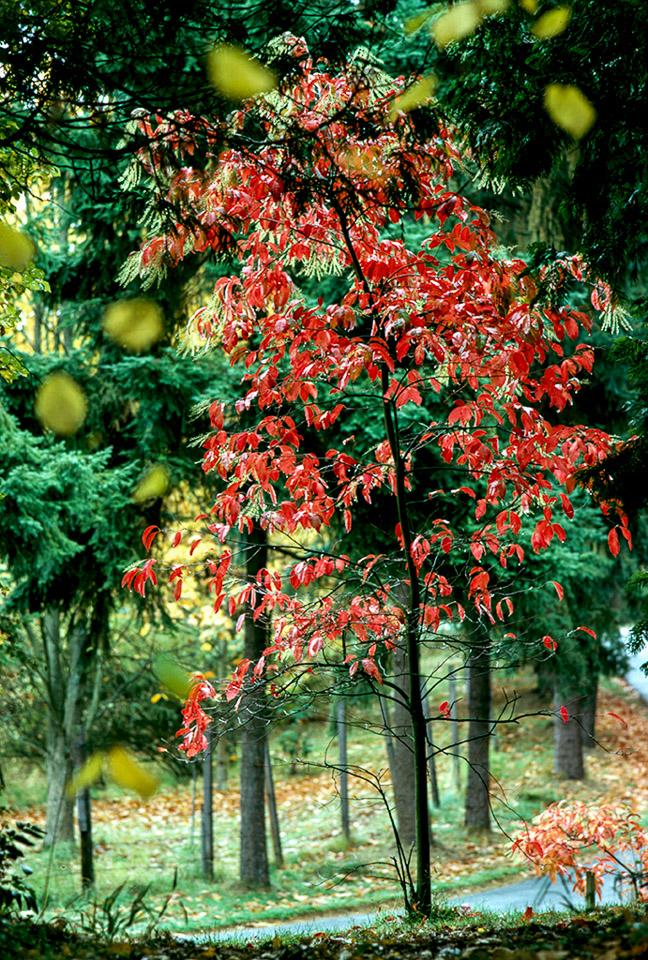 2005-05-19-Retro-1973-10-20-Seattle-UW-Arboretum.jpg