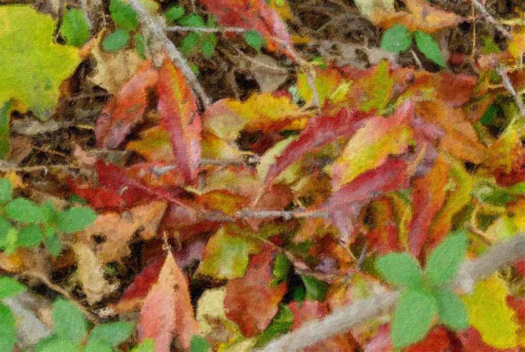 2006-11-14-Autumn-Leaves.jpg
