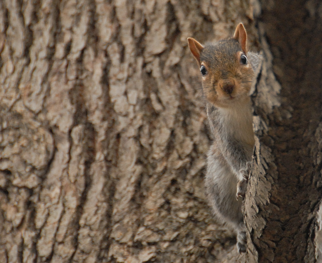 2007-01-14-Squirrel.jpg