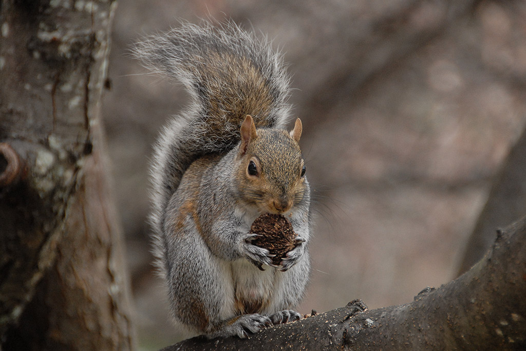 2007-12-15-Randolph-Squirrel.jpg