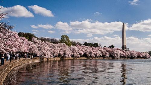2006-03-05-Tidal-Basin-Cherry-Blossoms.jpg