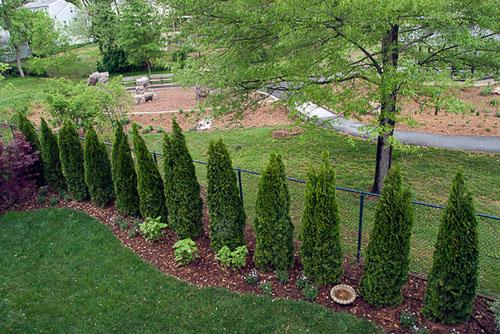 2011-04-28-Backyard.jpg