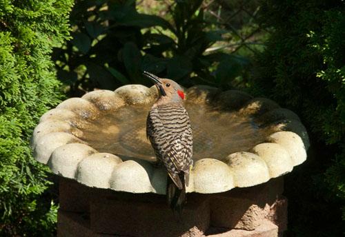 2011-06-28-Woodpecker.jpg