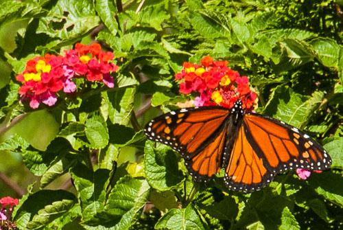 2011-08-30-Papillion.jpg