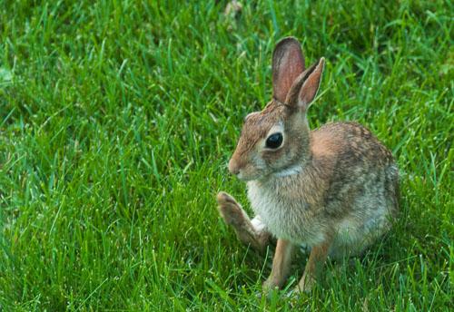 2012-05-28-Thumper.jpg