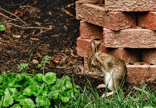 2012-08-08-Bunny-Ears.jpg