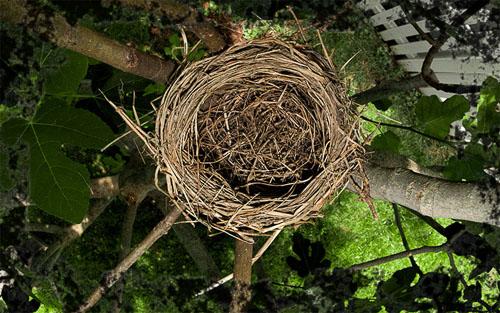 2013-06-25-Empty-Nest.jpg