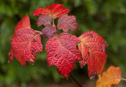 2014-12-06-Autumnal-Splendor.jpg