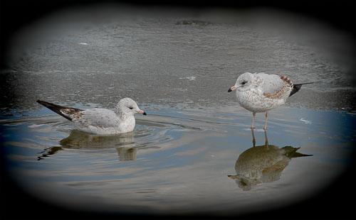 2015-12-12-Retro-2007-01-03-Gulls.jpg